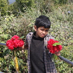 nepal&d=nature_flowers